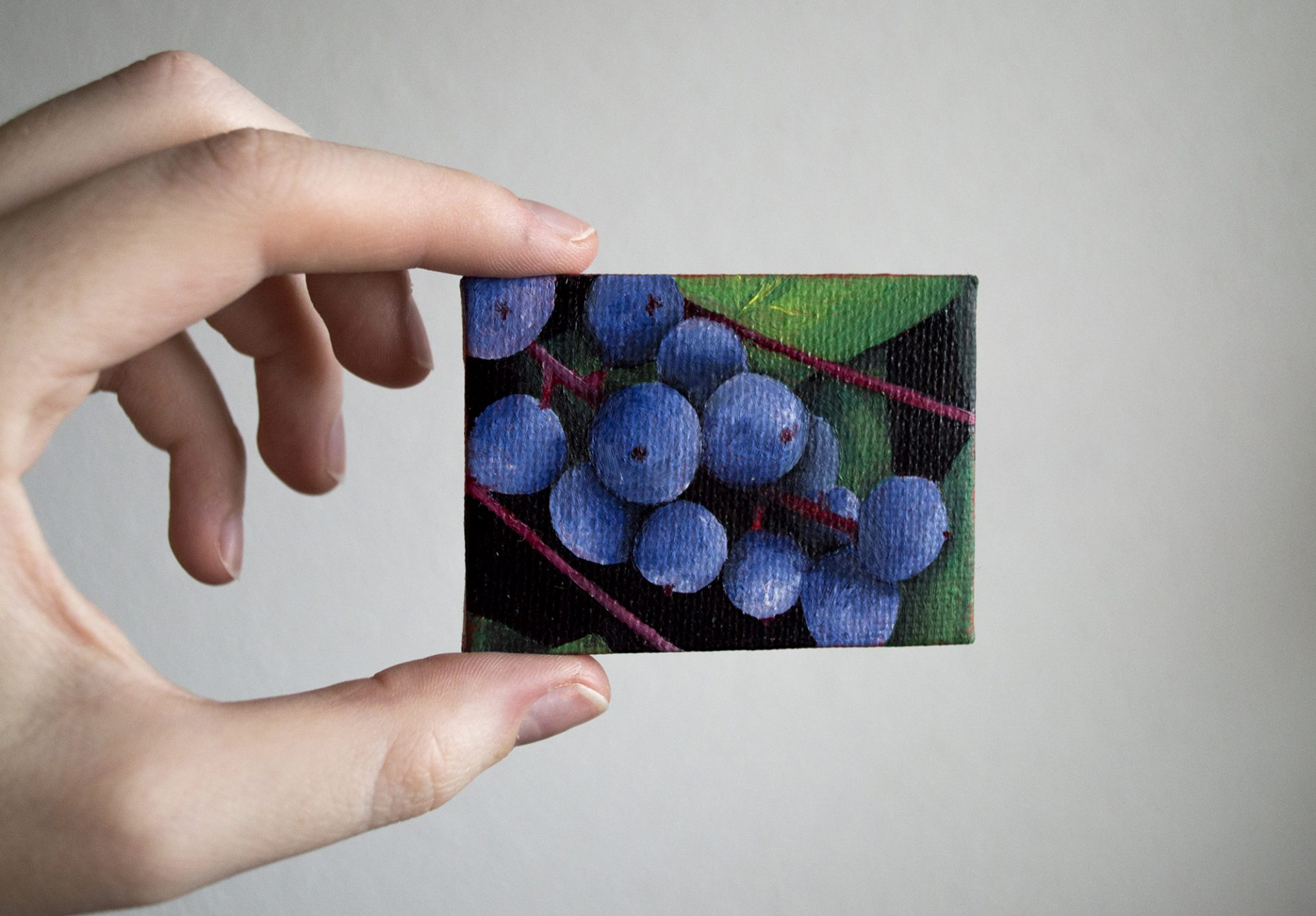 oregon-grapes-tiny-canvas